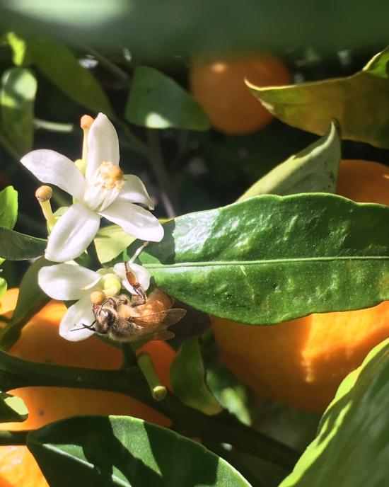 Ariana Mallery - Photography - Plants